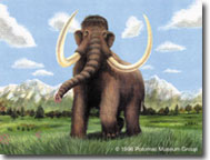 Wooly mammoth Painting for a traveling museum exhibit,  © Potomac Museum Group